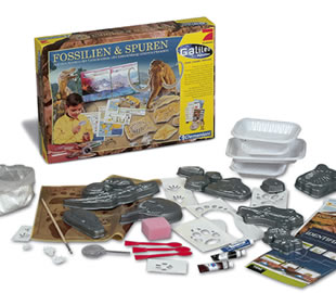 Fossilien & Spuren